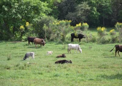galeria-exteriors-vaques
